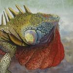 Iguane 3